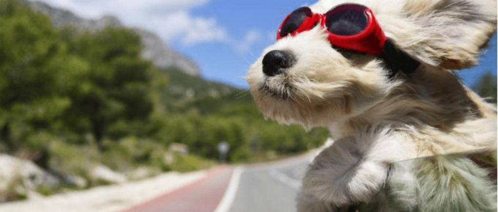 Perro con auto en carretera