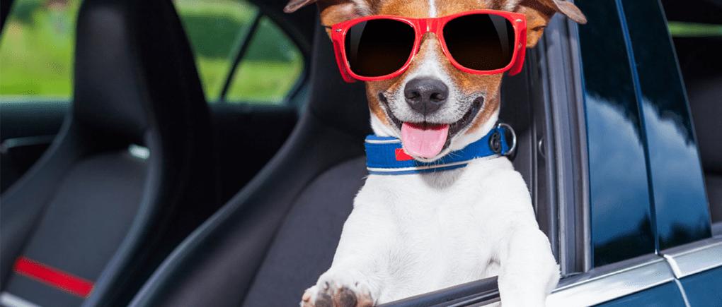 Perro abordo de auto